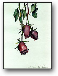 Rose I draw.  - Click to read how I draw the roses.